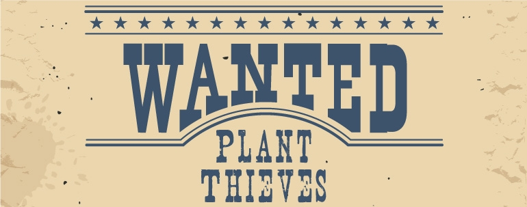 Council not discouraged by plant theft
